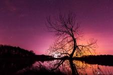 Altmark-Landschaftsfotografie-Langensalzwedel-Baum