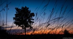 Altmark-Sonnenuntergang