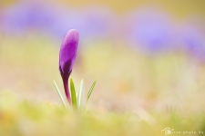 Blumen-Stendal-Altmark-Landschaftsfotografie