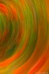 Mohnblumen-Kameraschwenk