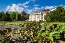 Schloss-Tangerhuette-Efeu