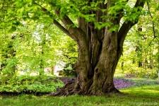 Starker-Baum-Altmark-Tangerhuette