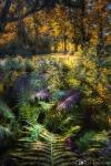 Urwaldfeeling-im-Krumker-Park