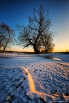 Winter-Baum-Altmark