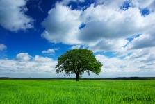 beese-altmark-baum-landschaftsfotografie