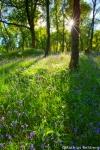 Wald-Blumen-Sonne-Schottland