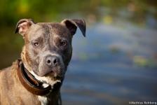 hund-bild