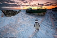 usedom-pinguin-composing